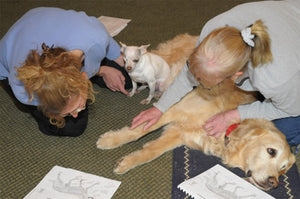 Meridians & Specific Conditions Hands on Training (4 Day) - Small Animal