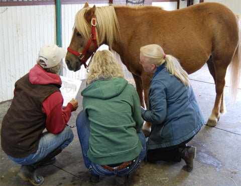 Meridians & Specific Conditions Hands on Training (4 Day) - Equine