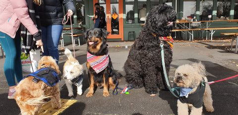 Dogs at Brunch, Hayes Common