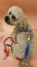Load image into Gallery viewer, San Francisco Adjustable Strap Harness - Rainbow