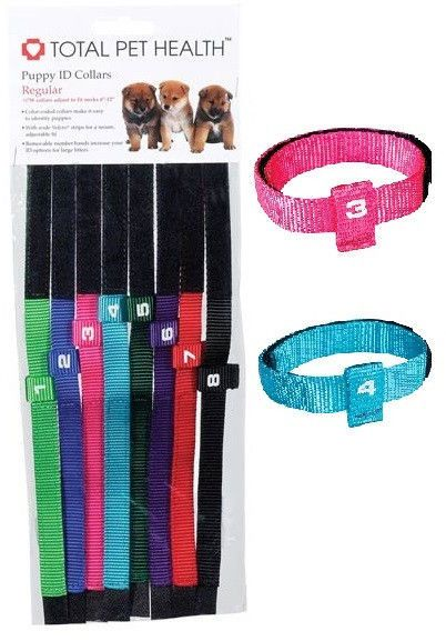 PUPPY ID COLLARS, Collars, Crazy Dog Lady
