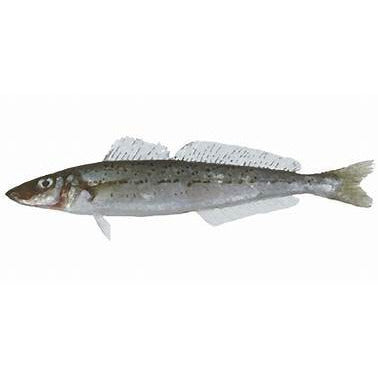 TFSL King George Whiting approx 500g