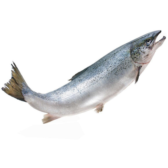 Salmon approx 500g