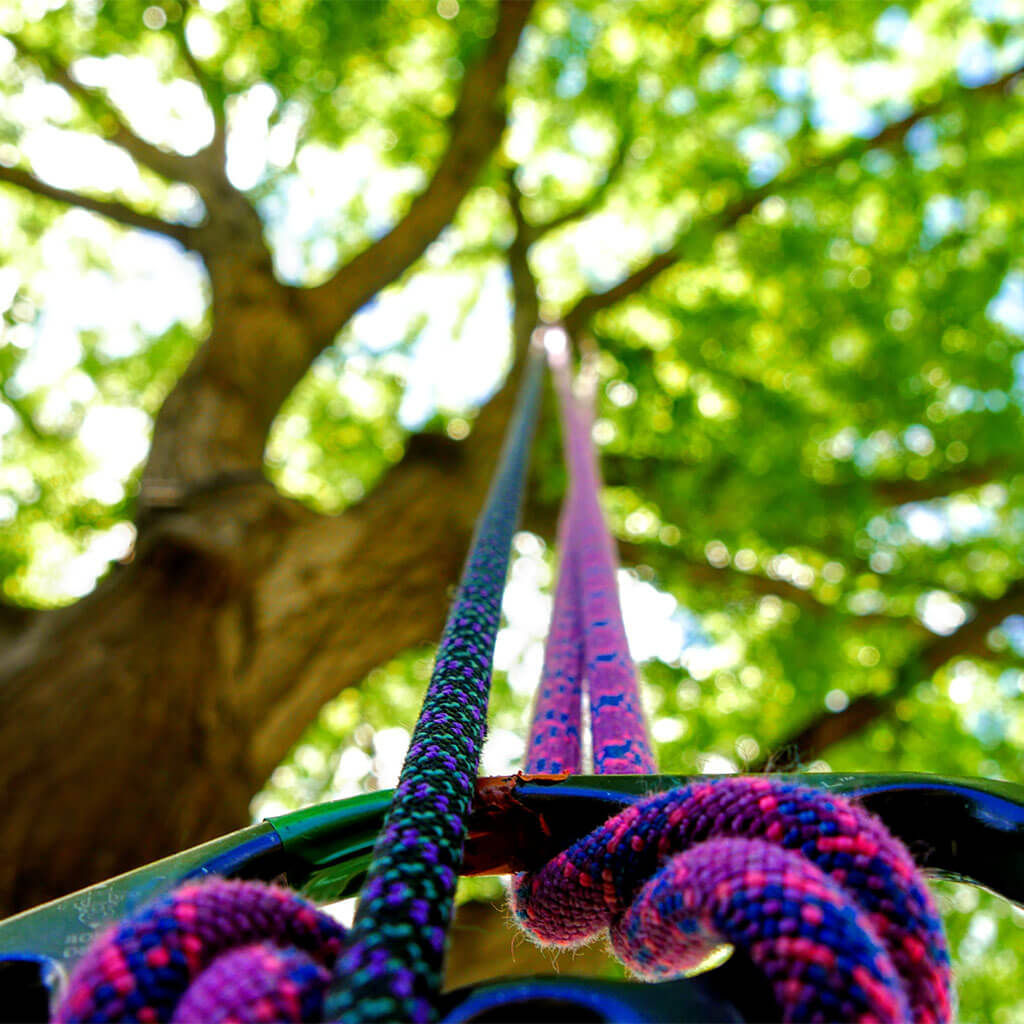 climbing gear hanging from tree