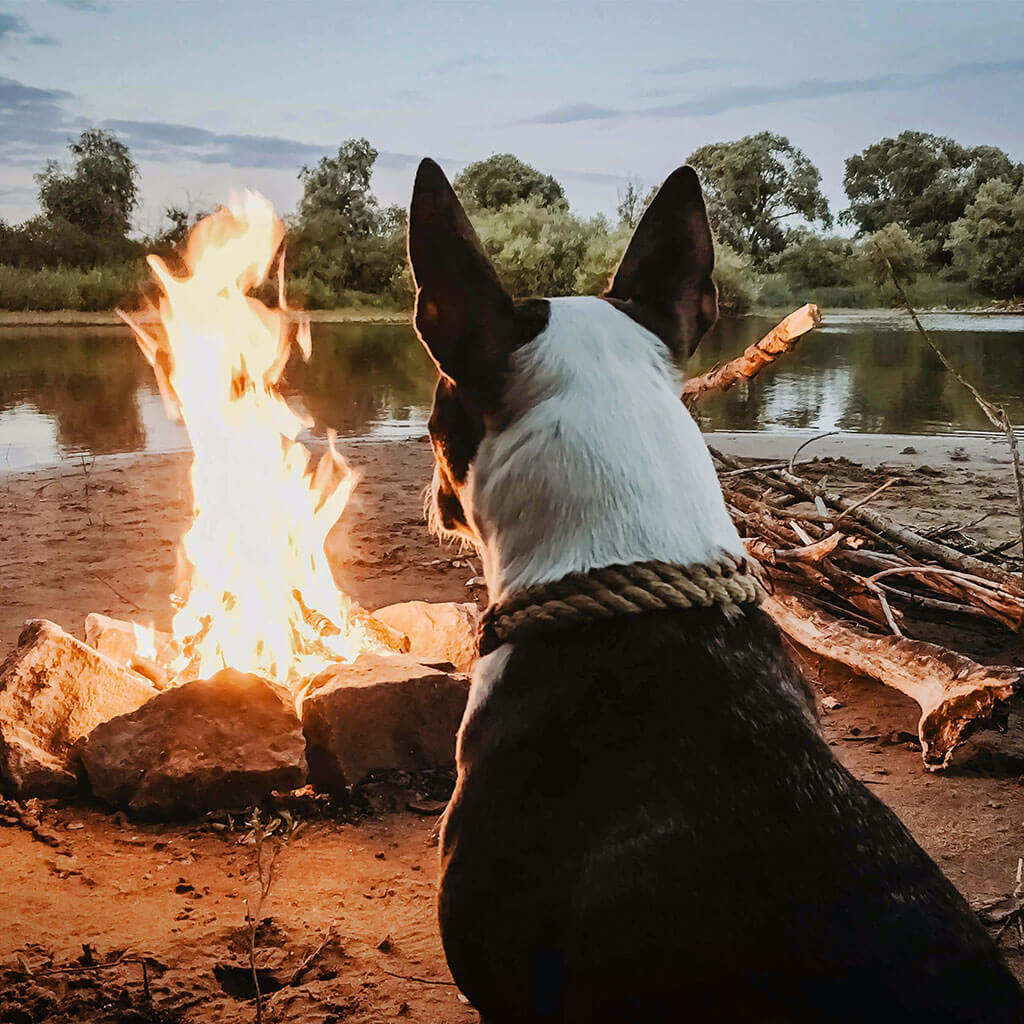 dog sitting by campfire staring at flames