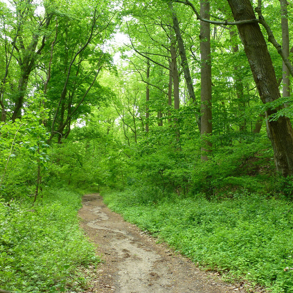 hiking trail through lush green forest