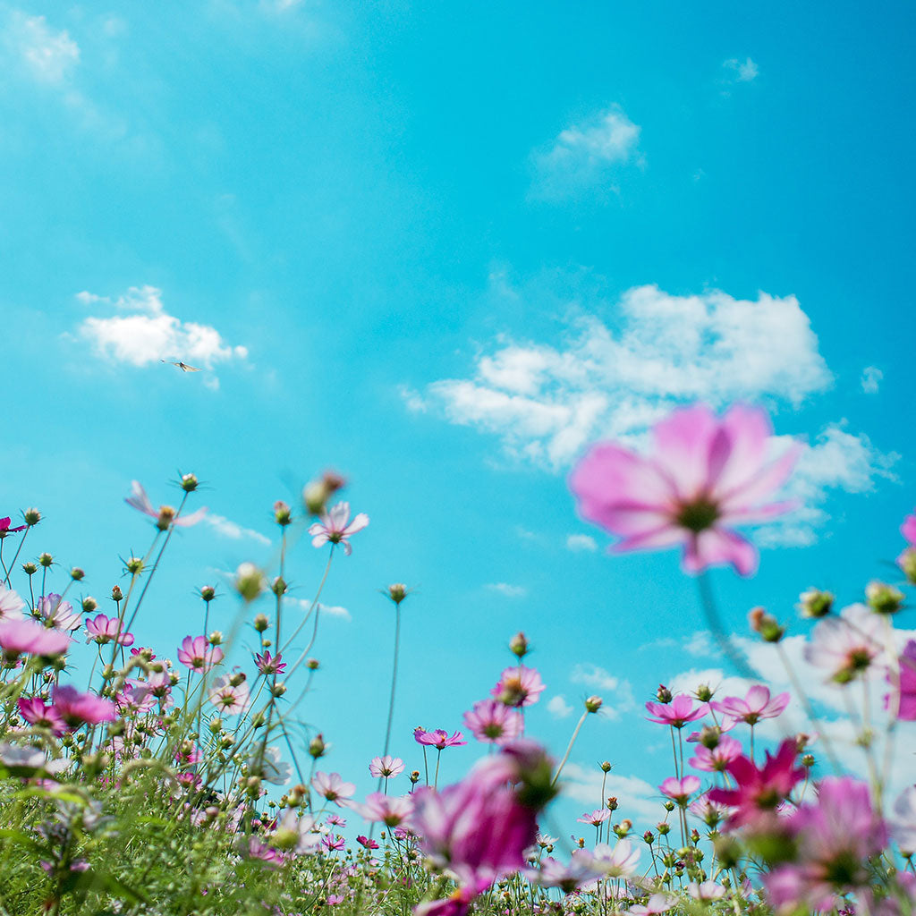 spring flowers underneath bright blue sky