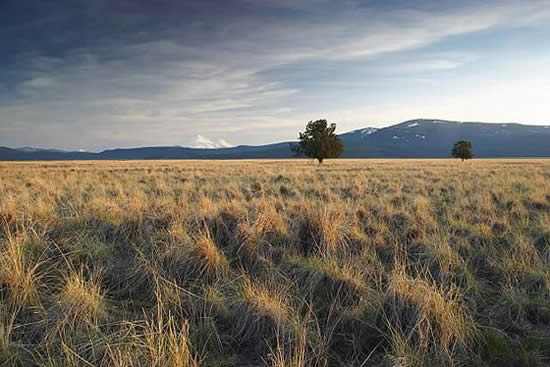 open grassy field with two trees and mountain range in background