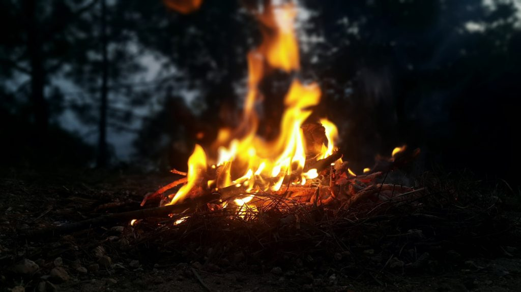 Campfire in woods.