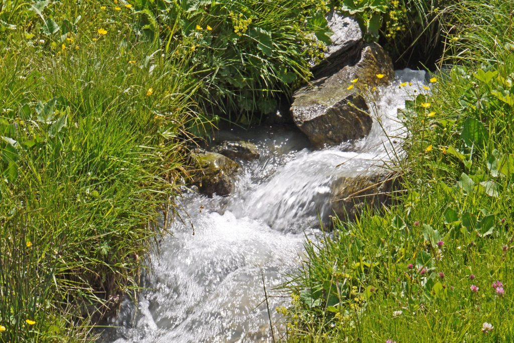 Water trickling down a grassy mountain stream.