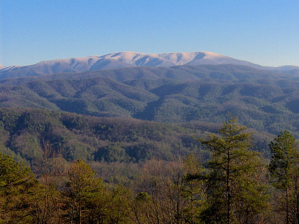 View from Gregory Bald mountain in the Great Smoky Mountains