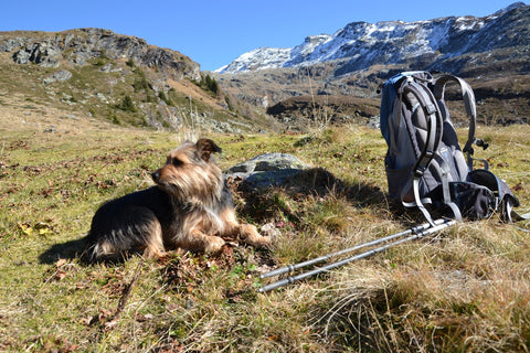 Small dog sits by hiking equipment in mountain field.