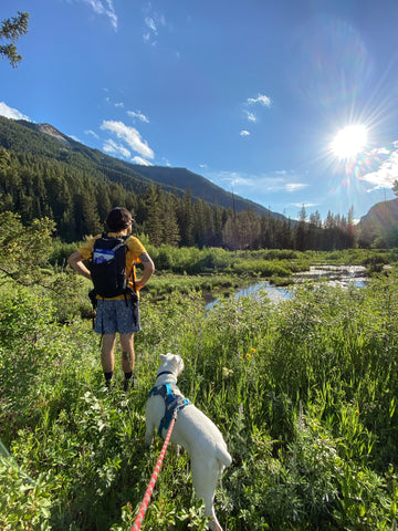 Hiking in Jackson, WY with a dog