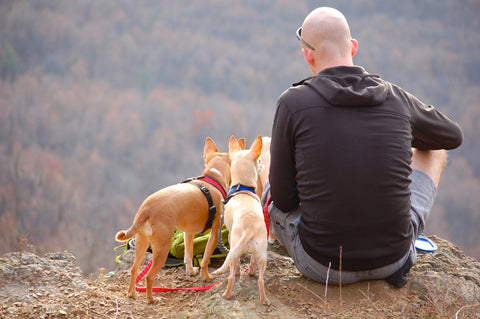 Man sits on mountain cliff with two small dogs.