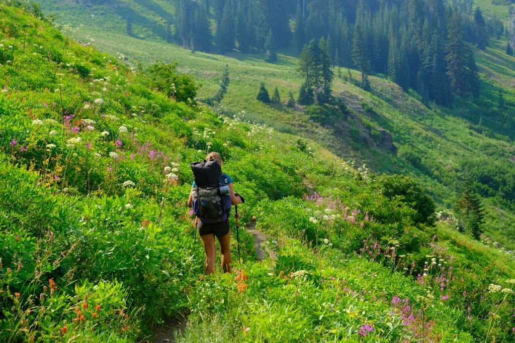 person wearing backpack and carrying trekking poles hikes through wildflower covered hillside on Pacific Crest Trail