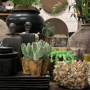 Homemonger Coral Display image