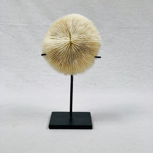 DECORATIVE CORAL SHELL ON STAND