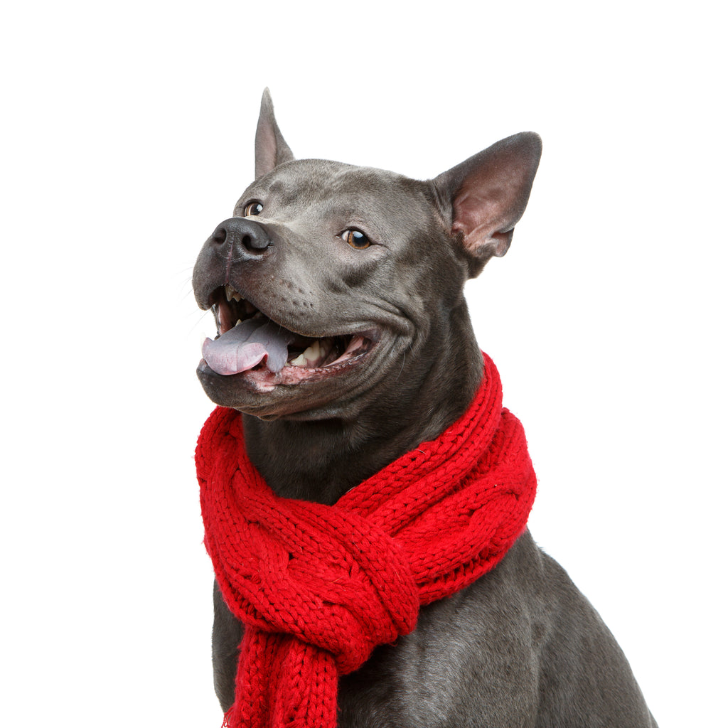 Scarf -Red (Big Dogs only)