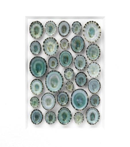 11x14 Aqua Limpet Mosaic on Cotswold in Bleached Hardwood