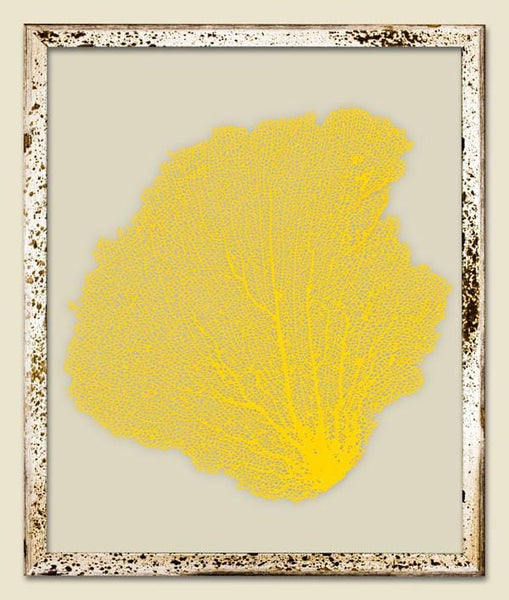 Ahi Yellow Sea Fan