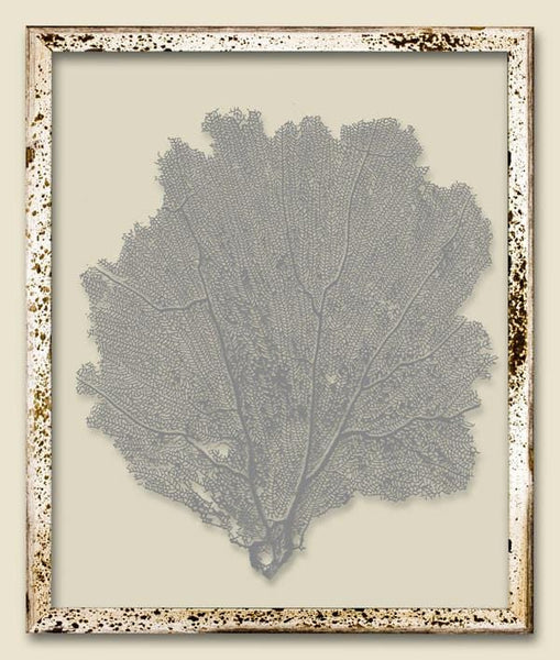 Harbor Gray Sea Fan