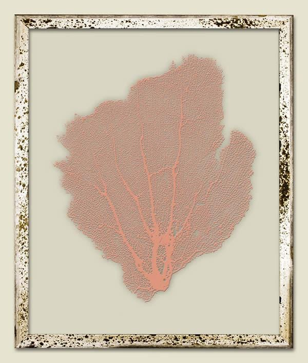 Salmon Sea Fan