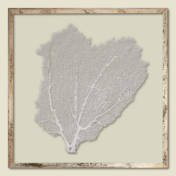 Sail White Sea Fan