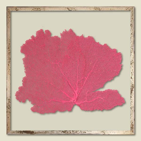 Tropical Pink Sea Fan