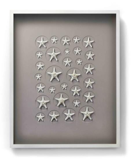 24x30 Achromic Starfish Mosiac on Cotswold in Bleached Hardwood