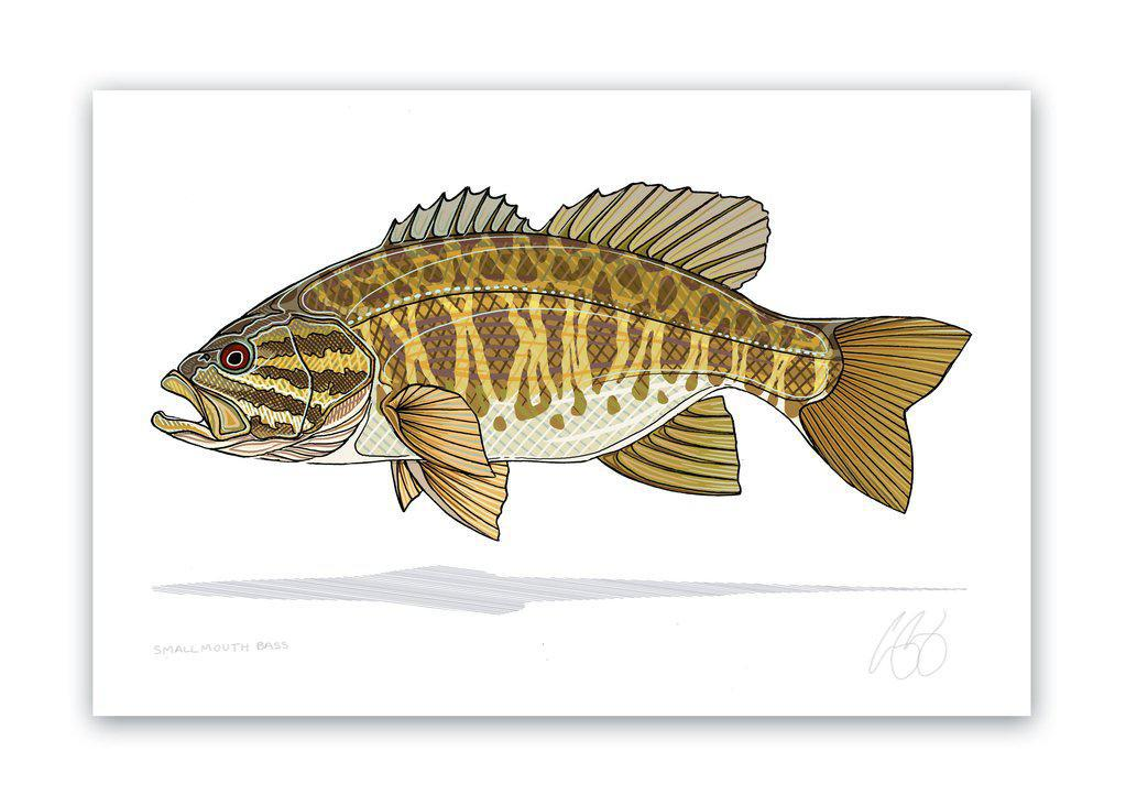 Smallmouth Bass Print 8x12