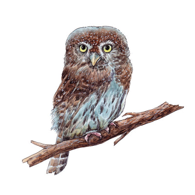 The Pygmy Owl