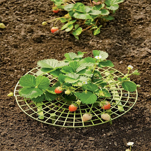 Handy Strawberry Supports for Your Garden