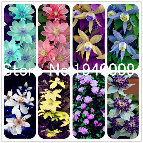 200 Pcs Climbing Clematis Flore Flower Seedsplants