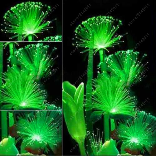 100 Pcs Rare Emerald Fluorescent Flower