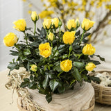 100 Pcs/Bag Rose Bonsai Seeds