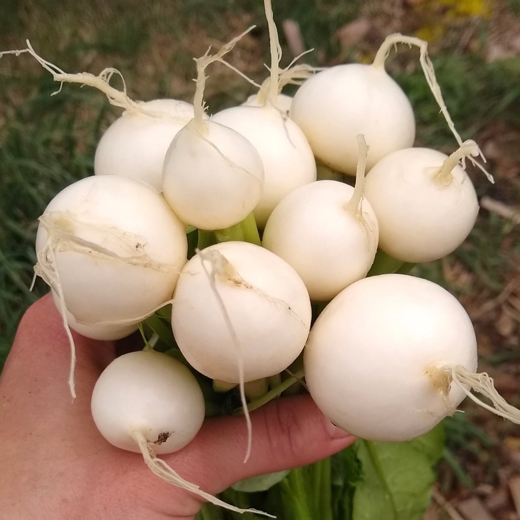 Spring Turnips, 1 bunch
