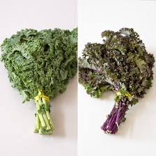 Purple and Green Kale, 1 bunch