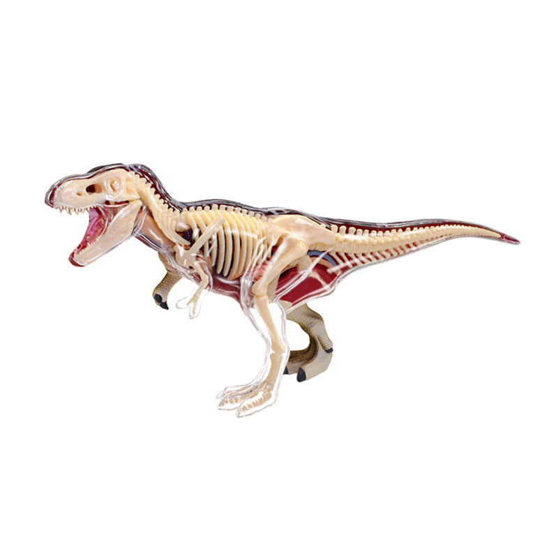 T-Rex Anatomy Model - Happki