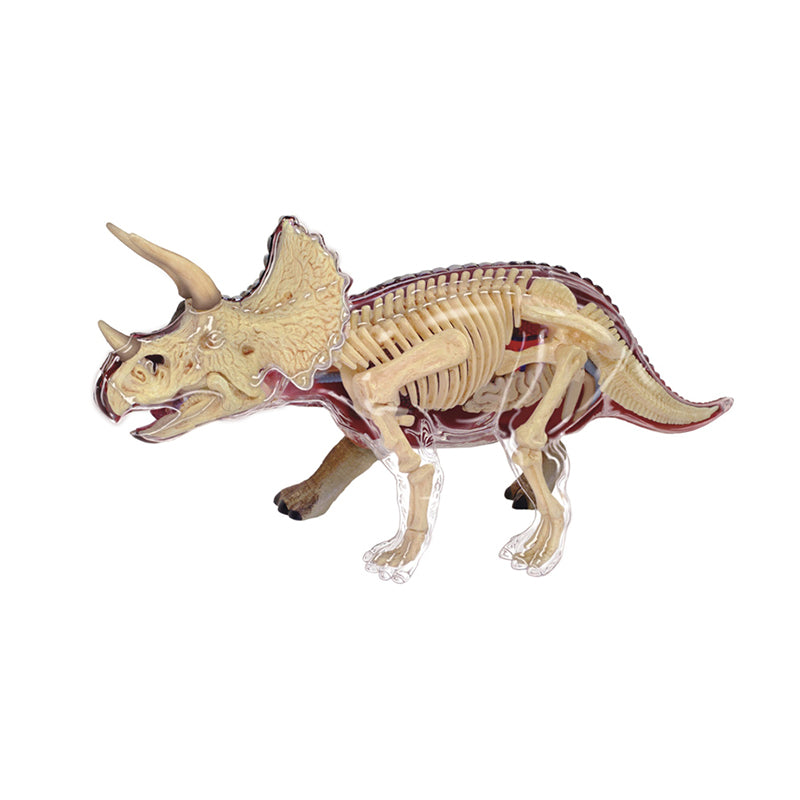 Triceratops Anatomy Model - Happki