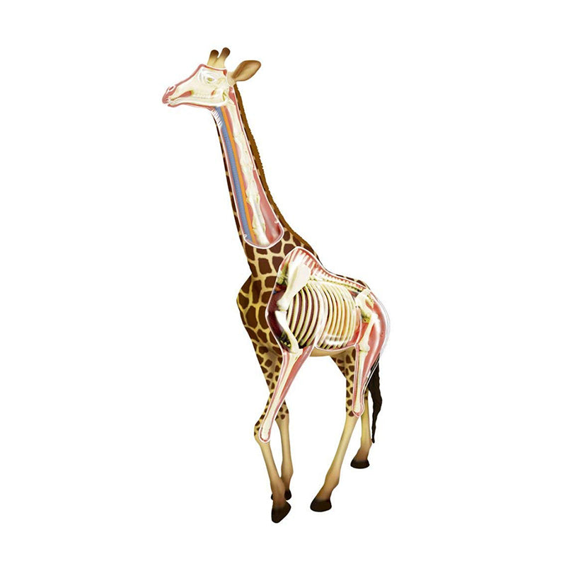 Giraffe Anatomy Model - Happki