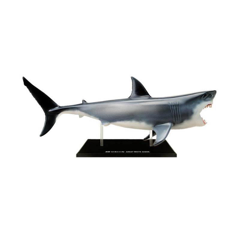 Great White Shark Anatomy Model - Happki