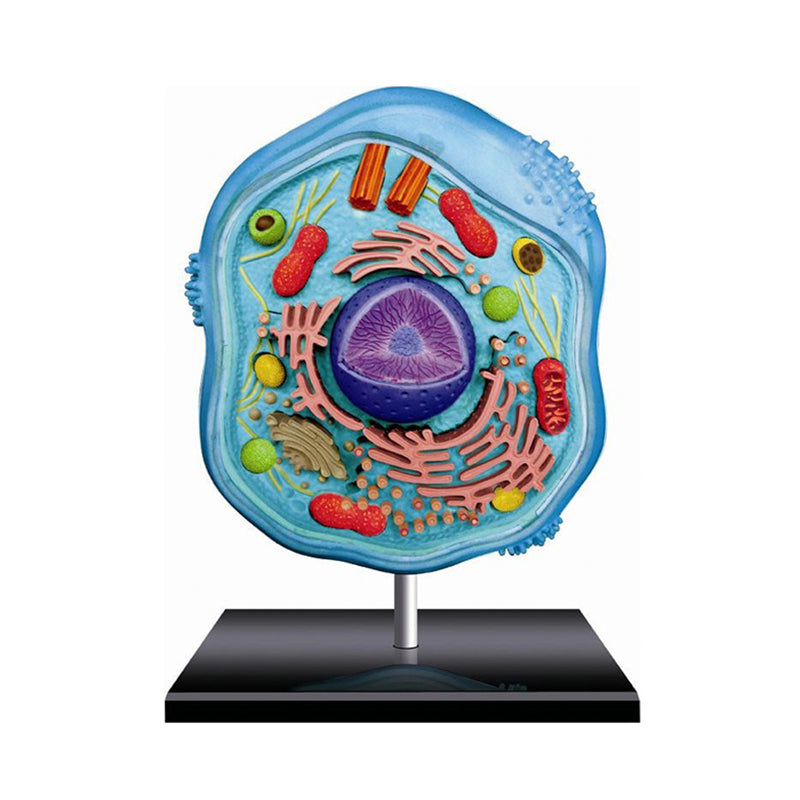 Animal Cell Anatomy Model - Happki