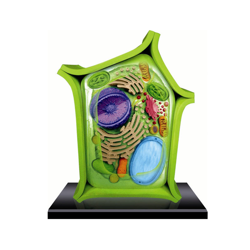 Plant Cell Anatomy Model - Happki