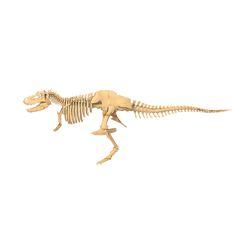 Giant Dinosaur Skeleton Kit - Happki