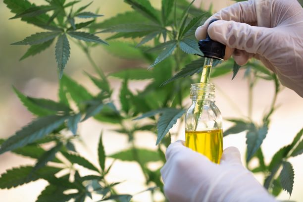 Why CBD Is Replacing Pharmaceutical Medicine!