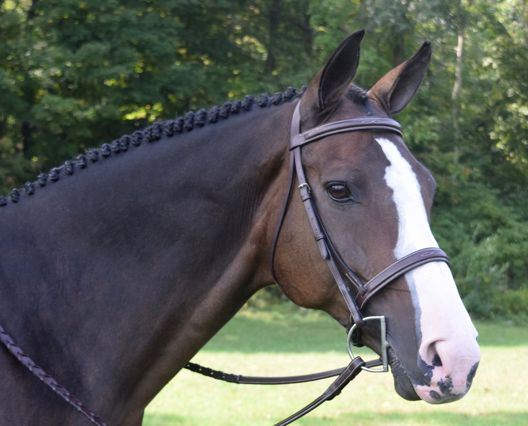 Black Oak Spruce  Bridle