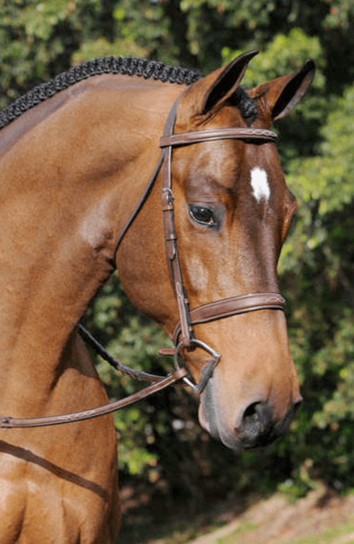 Arc De Triomphe Tribute Bridle