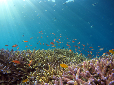 Ocean Biodiversity: What it is and why it is important