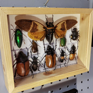 Bug specimen set 8x6 10pc