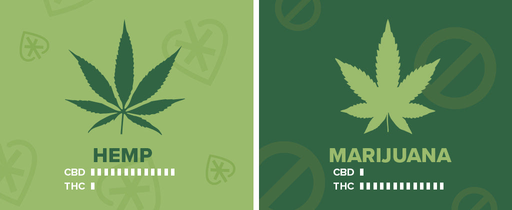 What is CBD? | Hemp | Marijuana